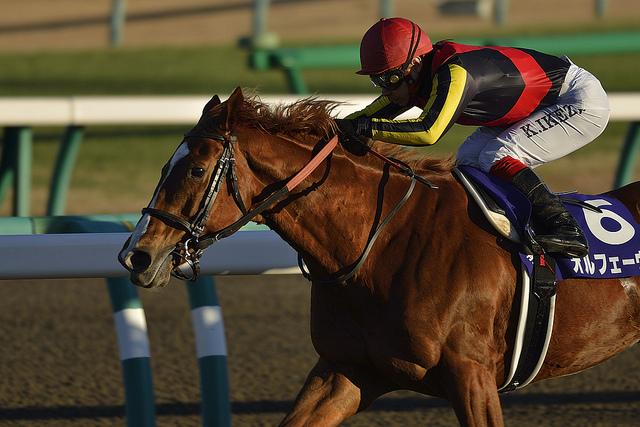 有馬記念2017の競馬予想分析…過去の血統と種牡馬、明確な共通点とは?