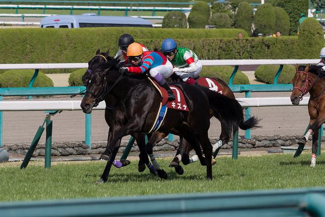 超豪華!GI馬7頭が集結!2015年産経大阪杯の出走予定馬と展望