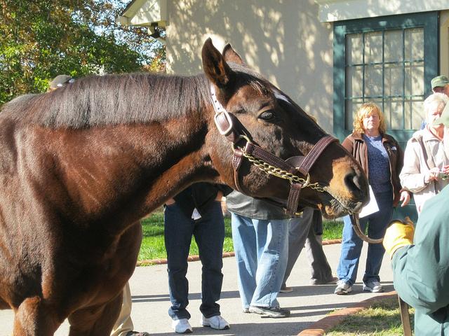 名種牡馬スマートストライクが死亡…代表産駒にカーリンやイングリッシュチャンネル