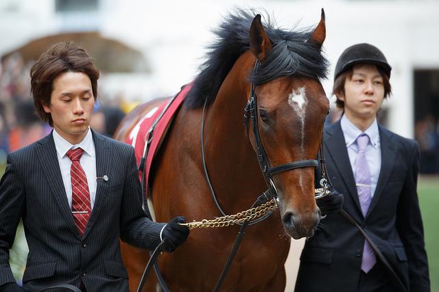 圧勝か惨敗か?モーリスという馬が安田記念で危険視される4つのワケ