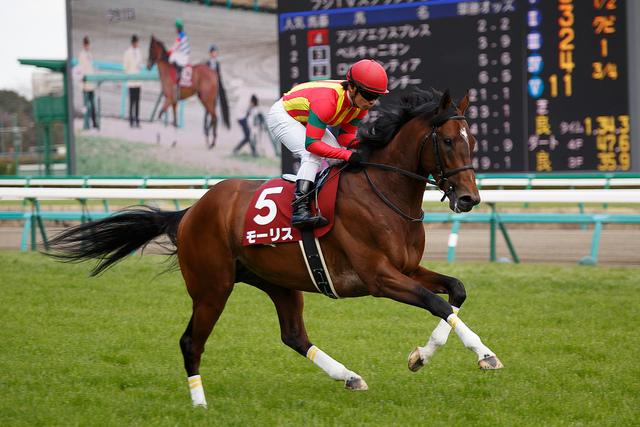 安田記念(2015年)の人気馬は?予想オッズと勢力図を展望