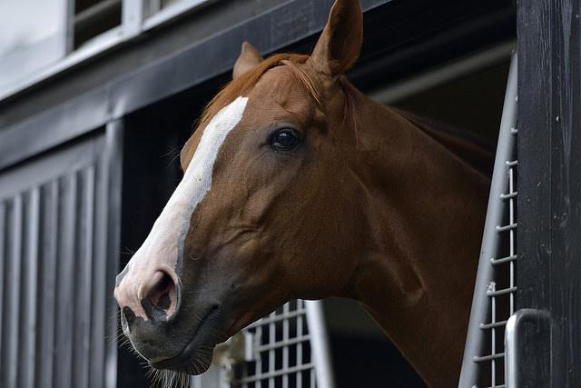 悲運の名馬アグネスタキオンが産駒全世代で重賞制覇を達成!活躍を振り返る