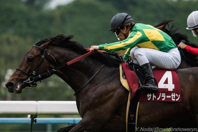 【セントライト記念2015】人気馬は?出走予定馬の勢力図と予想オッズを展望