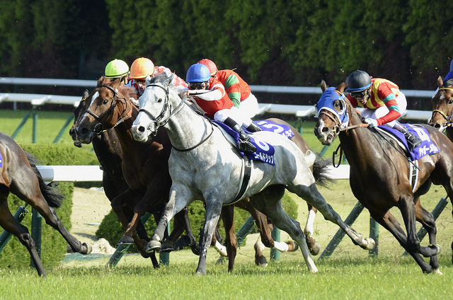長距離レースはなぜ面白いのか?天皇賞春に見た競馬の魅力と醍醐味