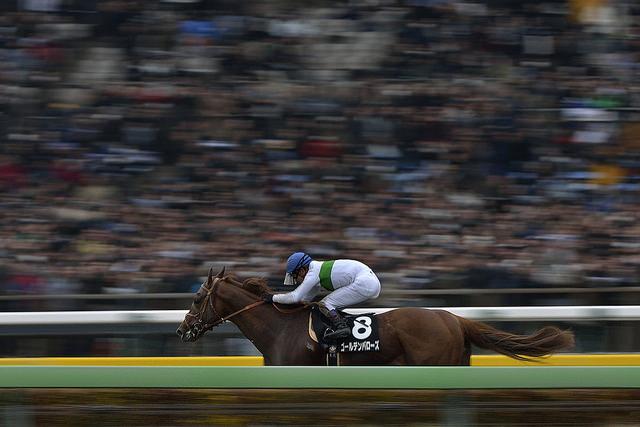 ユニコーンステークス(2015年)の人気馬は?勢力図と予想オッズを展望