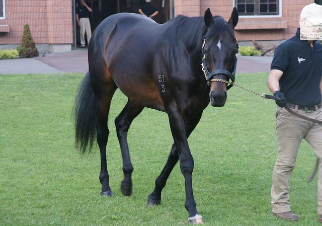 キンシャサノキセキ産駒の狙い所って?種牡馬としての特徴はイメージとやや異なる!