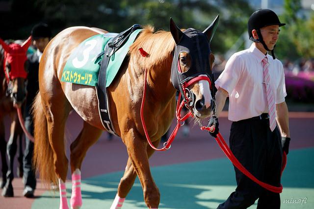 根岸S2018の競馬予想分析…過去の血統と種牡馬、明確な共通点とは?