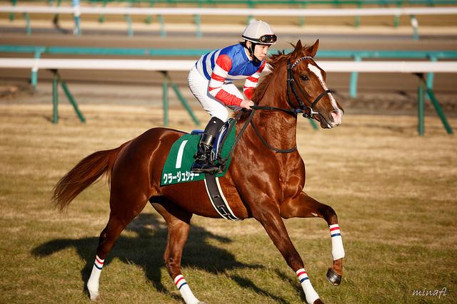 クラージュシチーの無念を語る厩舎関係者「命の尊さや競馬の難しさを改めて感じた」