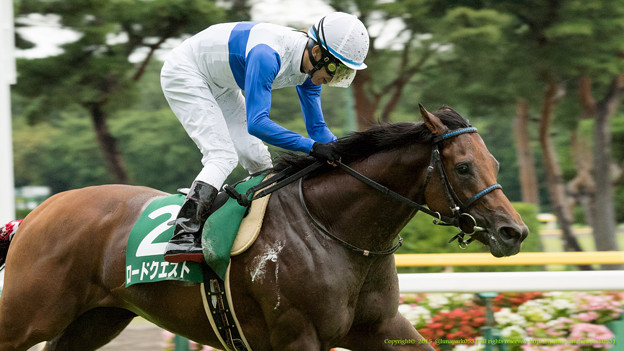 安田記念2019の競馬予想分析!3つのデータから導く穴馬候補