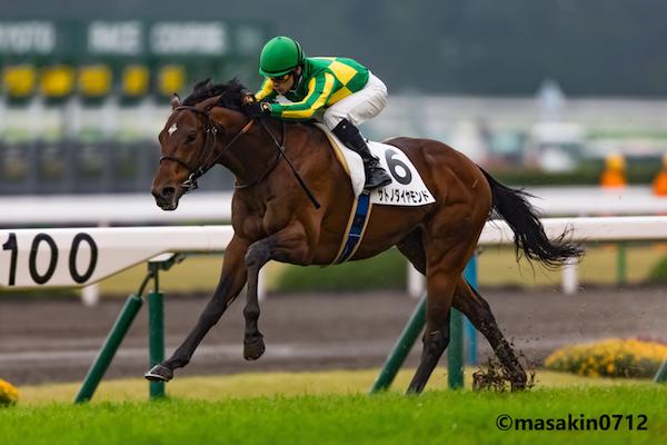 きさらぎ賞2018の競馬予想分析...過去の血統と種牡馬、明確な共通点とは?
