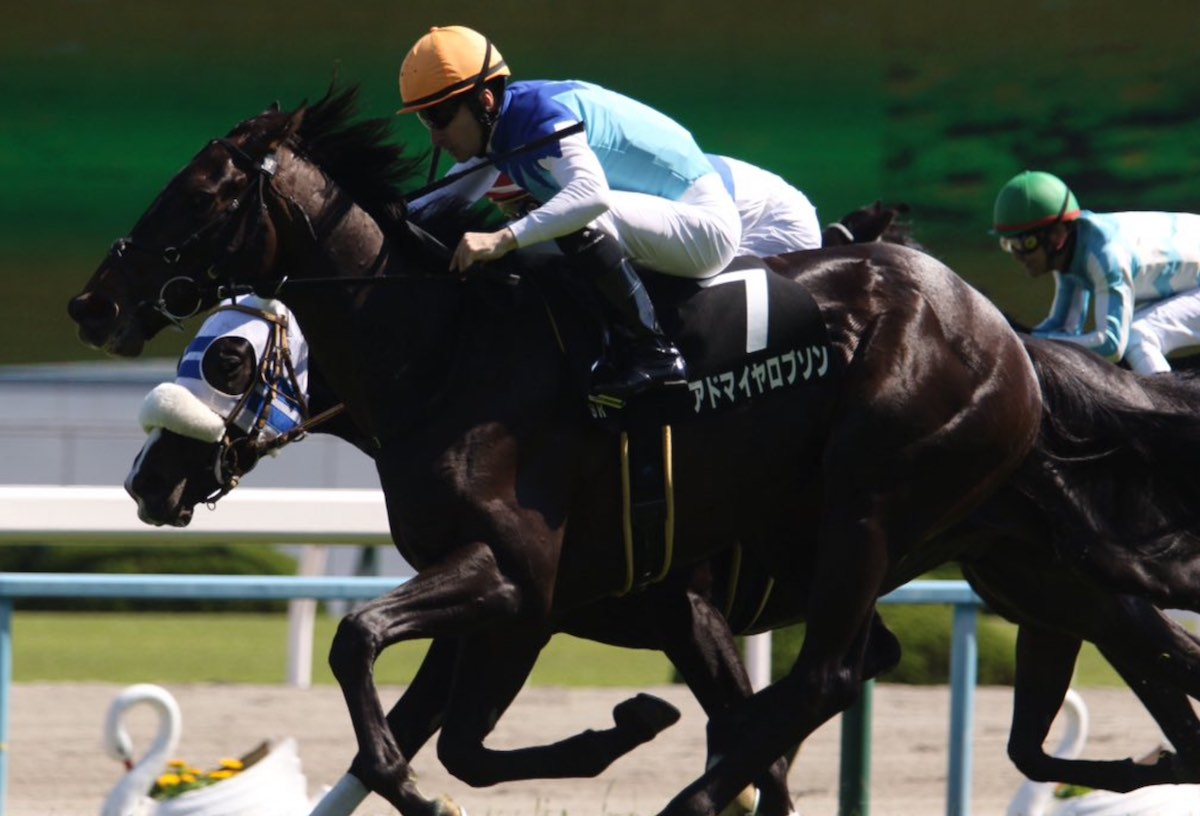 アドマイヤロブソンの血統や次走、将来性は?菊花賞で楽しみな馬か