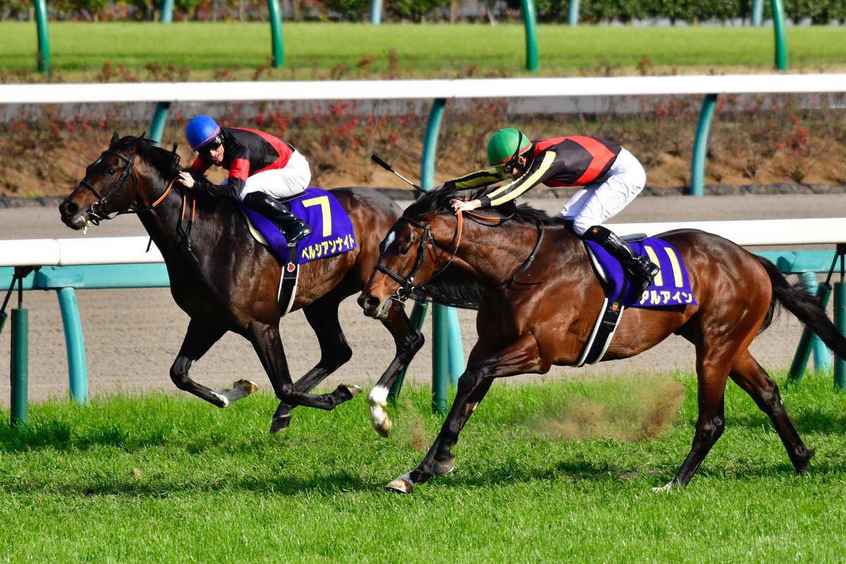 菊花賞2017枠順発表!決定した出走予定馬と騎手、過去10年の傾向は?