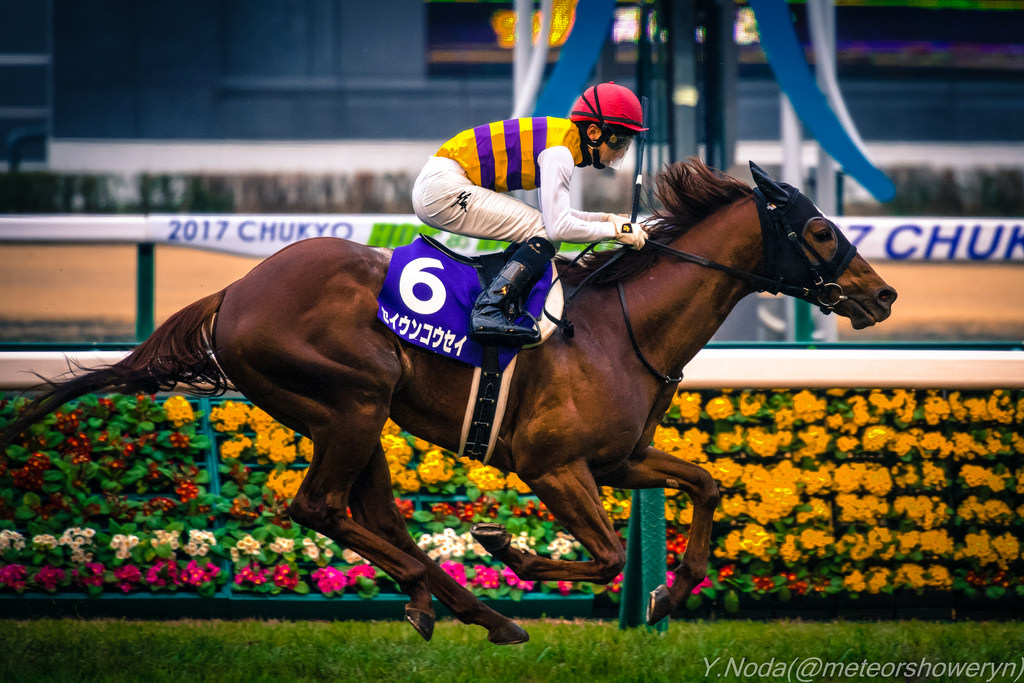 スプリンターズS2018の競馬予想分析!5つのデータから導く穴馬候補