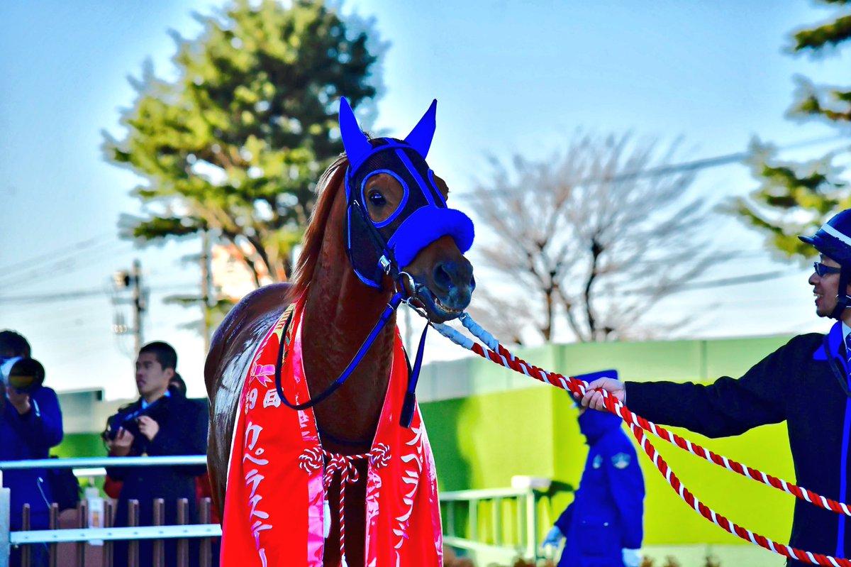 カペラS2018の競馬予想分析!過去の血統と種牡馬の共通点とは?