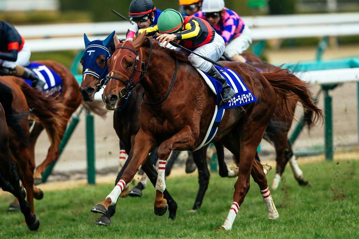 中山記念2019の競馬予想分析!3つのデータから導く危険な人気馬