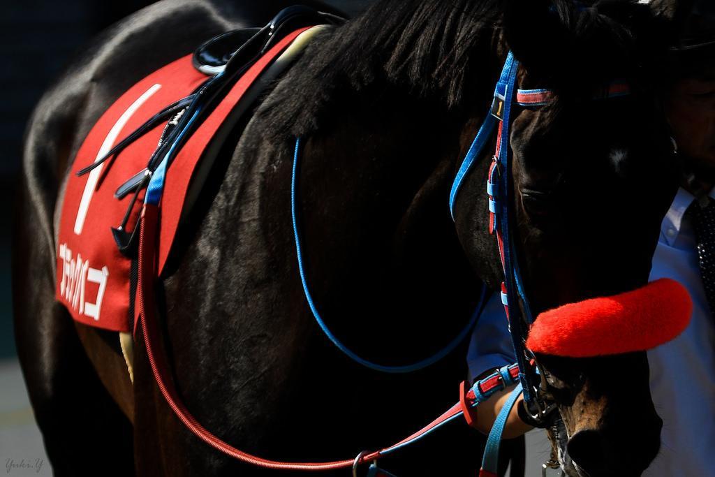 函館記念2019の競馬予想分析!5つのデータから導く勝ち馬候補