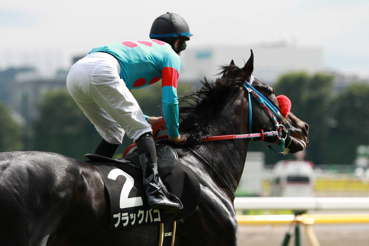 函館記念2019の競馬予想分析!3つのデータから導く穴馬候補