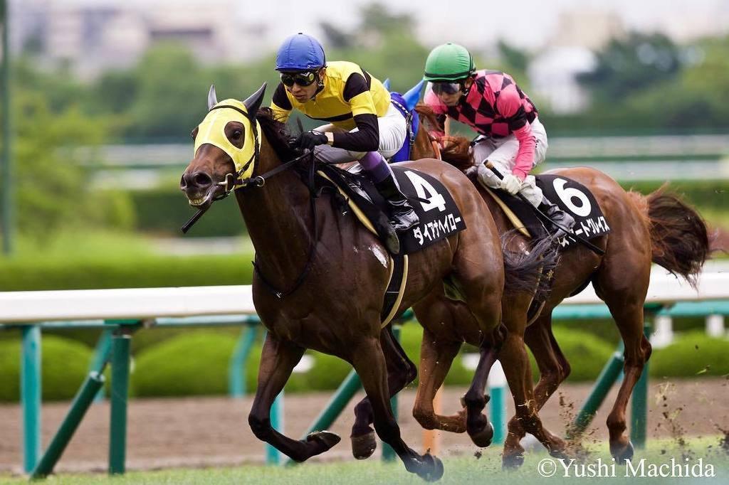 シルクロードS2018の予想オッズ・人気と出走予定馬は?短距離戦線を占う一戦を展望