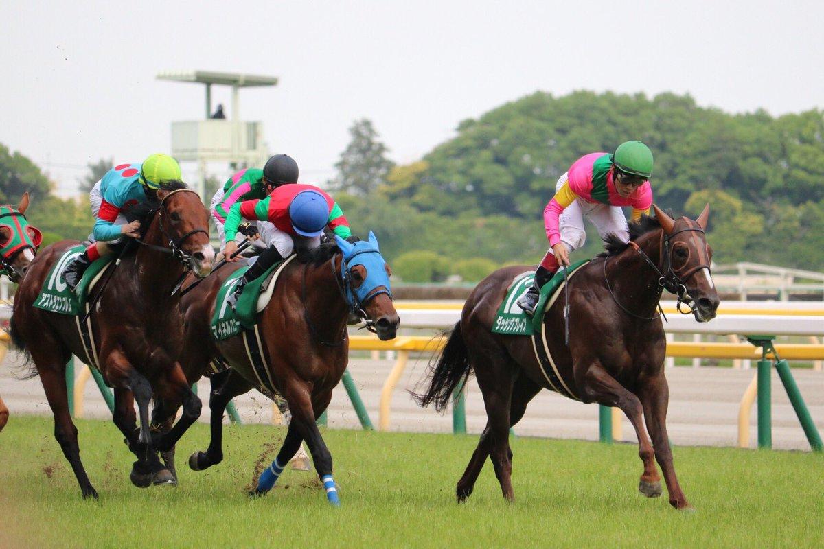 中山記念2018の競馬予想分析…マイネルハニーの激走を示唆する3つの要素