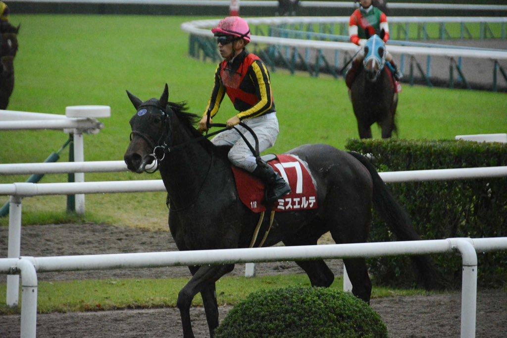 京都牝馬S2018予想分析…ミスエルテが期待できないワケ
