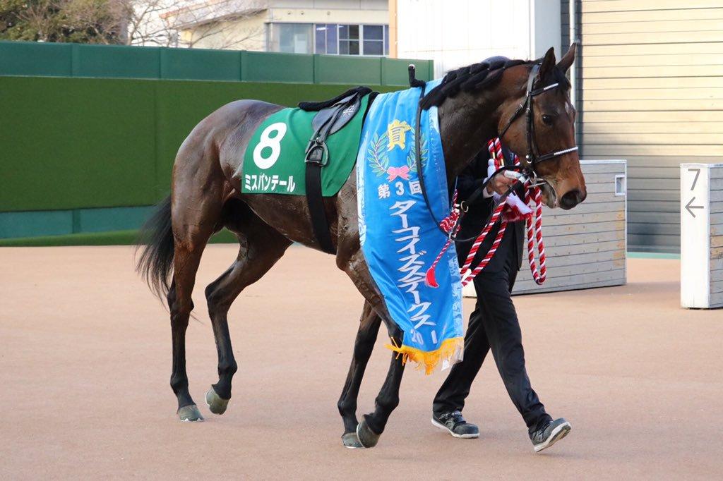 京都牝馬S2018の予想オッズ・人気と日程、出走予定馬と過去の傾向は?