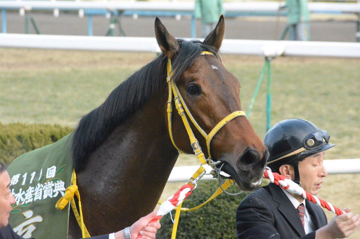 阪神大賞典2018の予想オッズ・人気と日程、出走予定馬と過去の傾向は?