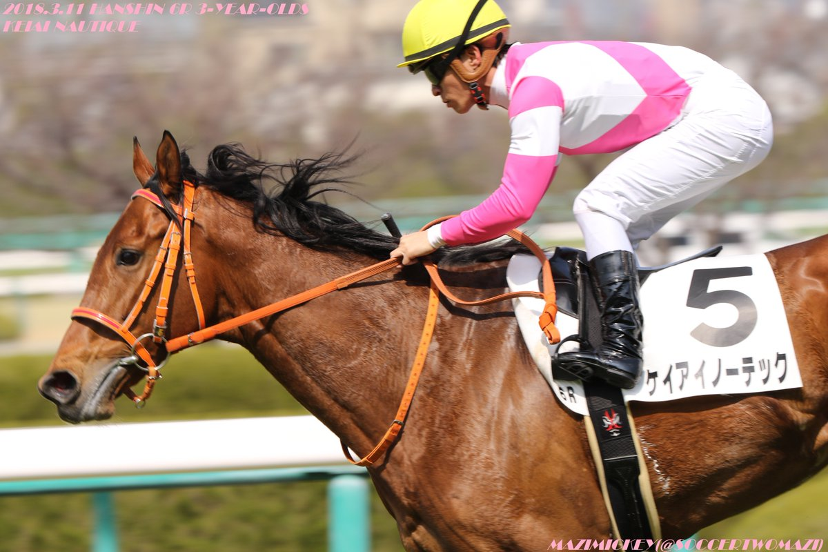 阪神カップ2018の予想オッズ・人気と出走予定馬は?暮れのJRA短距離重賞展望