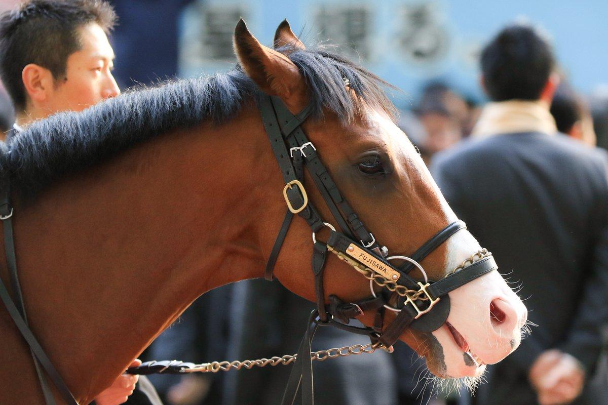 NHKマイルカップ2018の予想オッズ・人気と出走予定馬は?3歳マイル王決定戦展望