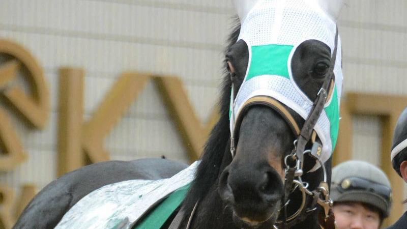 シルクロードS2019の競馬予想分析!3つのデータから導く穴馬候補