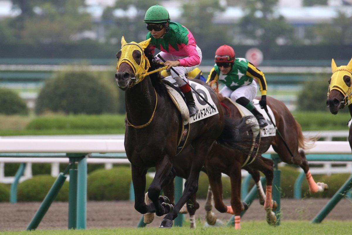 サウジアラビアRC2018の競馬予想分析!3つのデータから導く穴馬候補