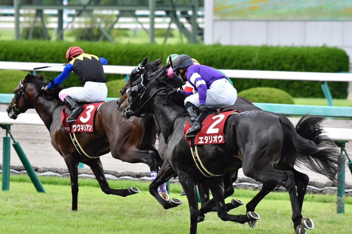 日経賞2019の予想オッズ・人気と注目の出走予定馬は?JRA重賞展望