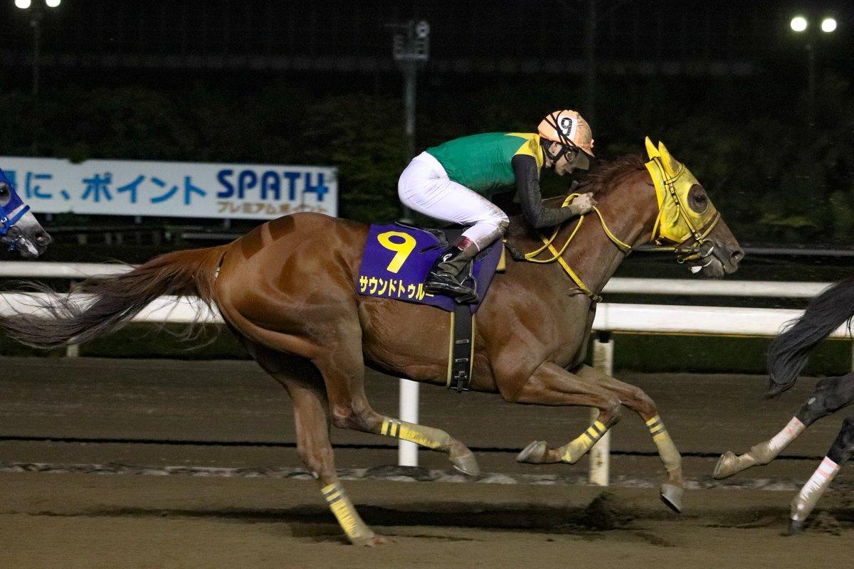 東京大賞典2018の競馬予想分析!3つのデータから導く穴馬候補