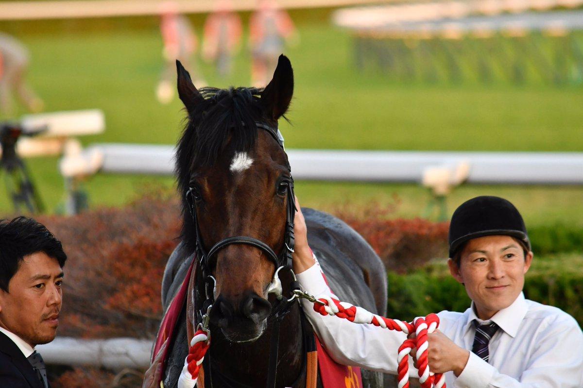 高松宮記念2019の予想オッズ・人気と注目の出走予定馬は?JRA重賞展望