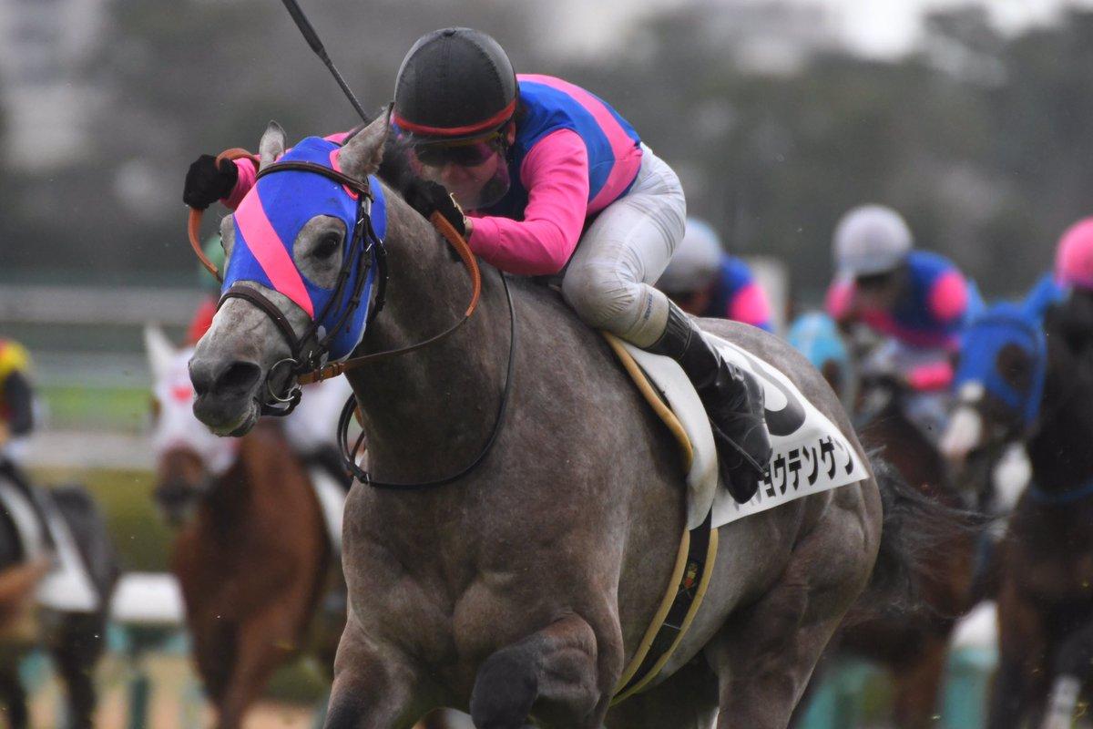きさらぎ賞2019の競馬予想分析!3つのデータから導く穴馬候補