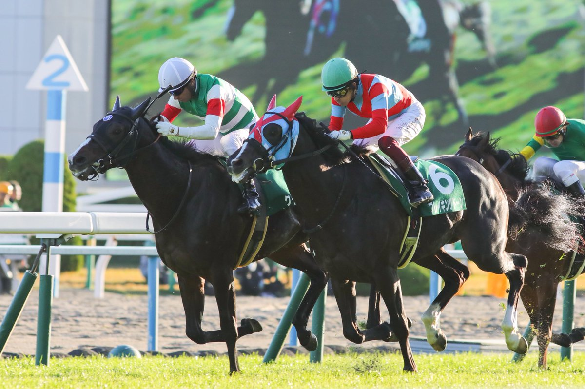 京都新聞杯2019の競馬予想分析!3つのデータから導く勝ち馬候補