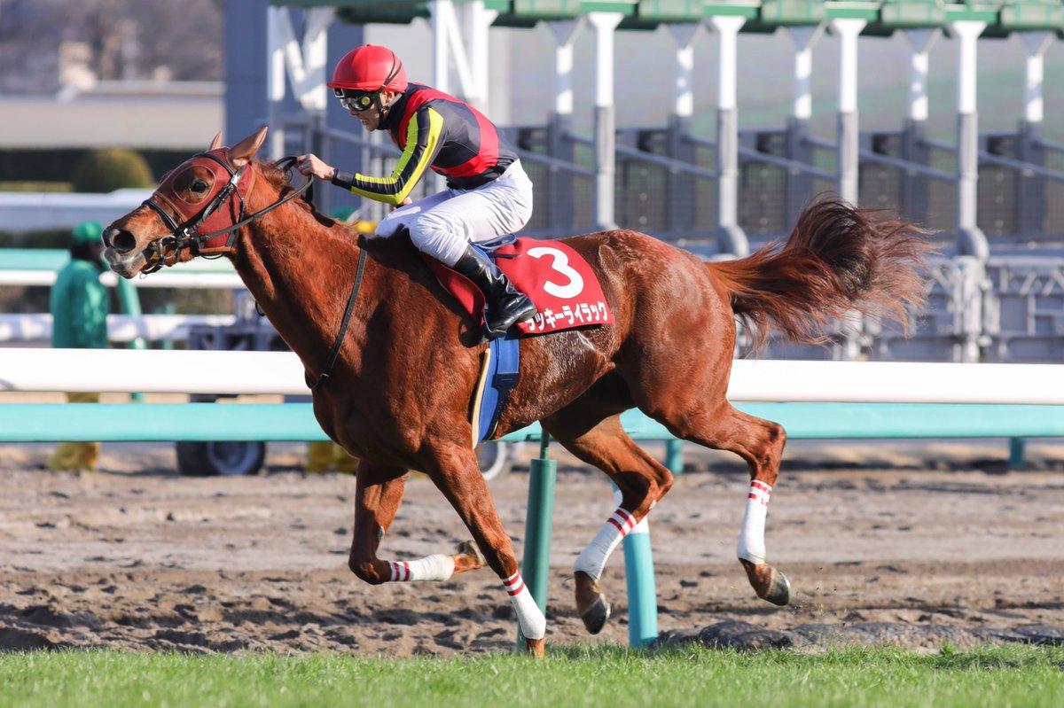 阪神牝馬S2019の予想オッズ・人気と注目の出走予定馬は?JRA重賞展望