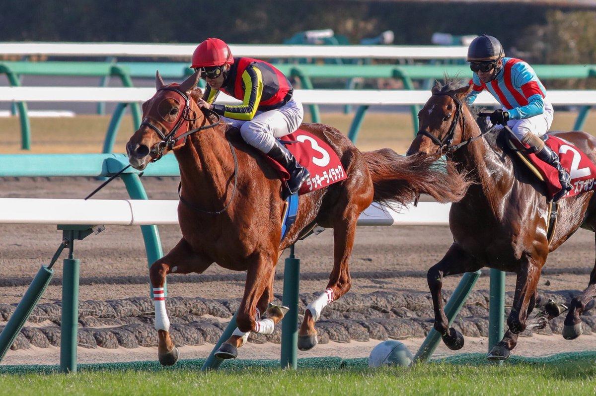 阪神牝馬S2019の競馬予想分析!4つのデータから導く勝ち馬候補