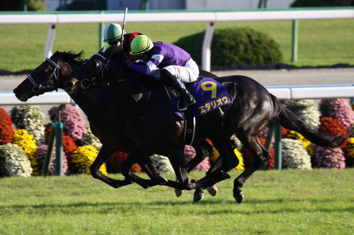 日経賞2020の競馬予想分析!3つのデータから導く危険な人気馬
