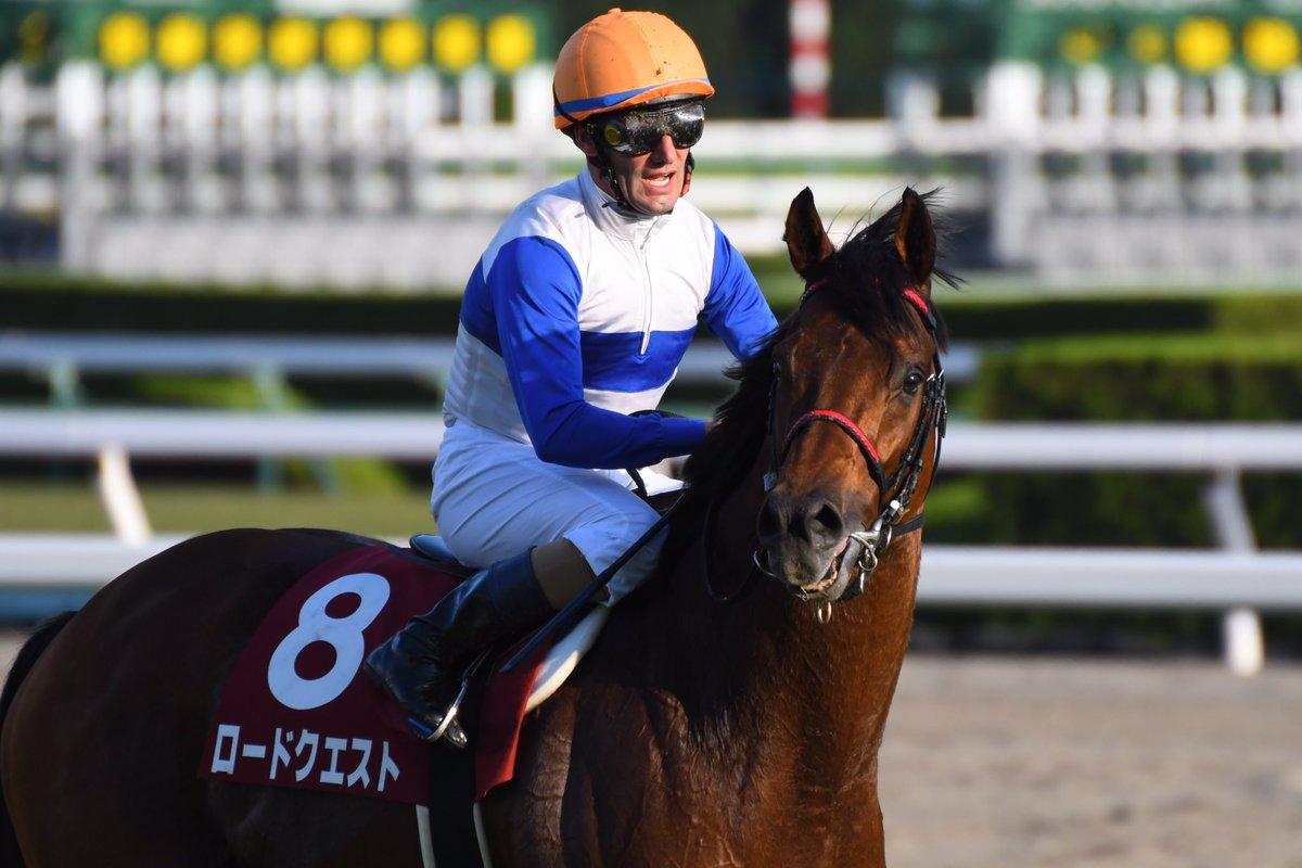 京成杯オータムハンデキャップ2019の競馬予想分析!6つのデータから導く勝ち馬候補