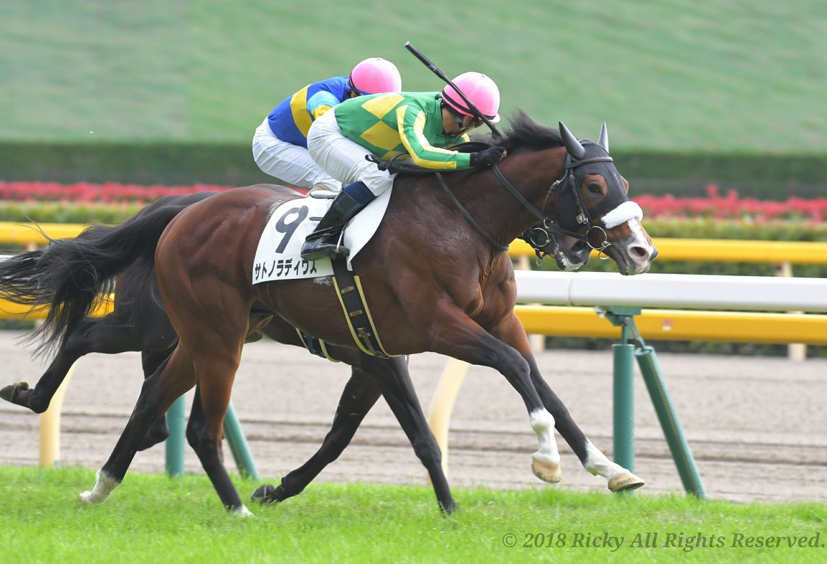青葉賞2019の競馬予想分析!4つのデータから導く勝ち馬候補