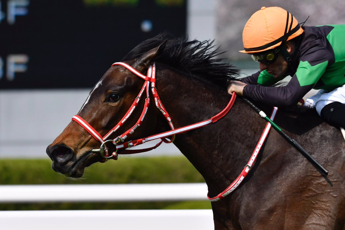 京都記念2021の競馬予想分析!3つのデータから導く危険な人気馬