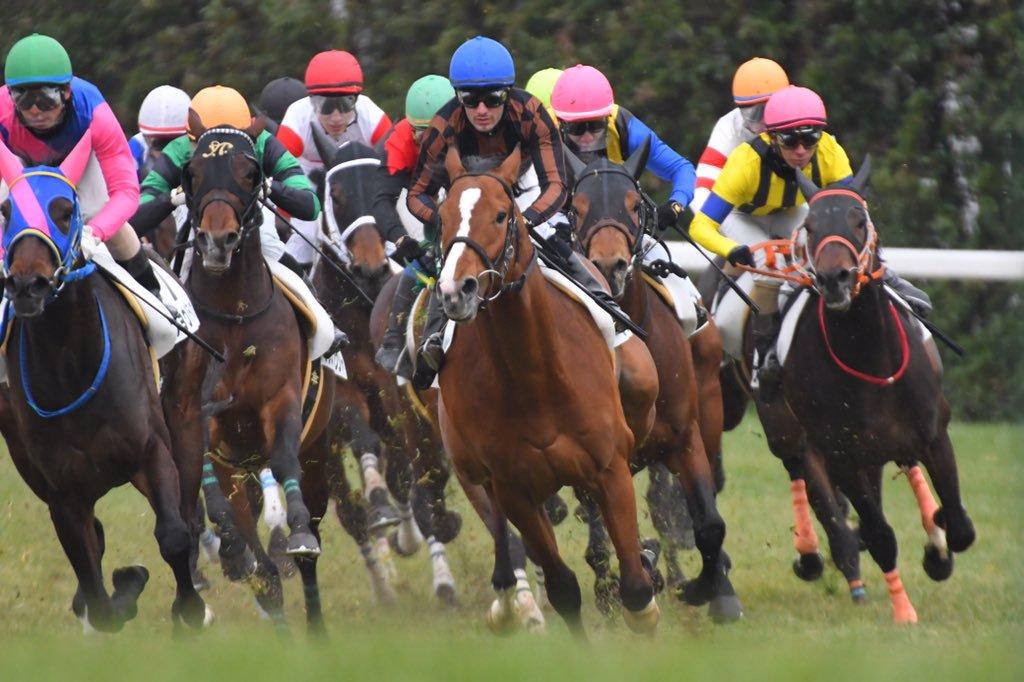 京都新聞杯2019の競馬予想分析!3つのデータから導く穴馬候補