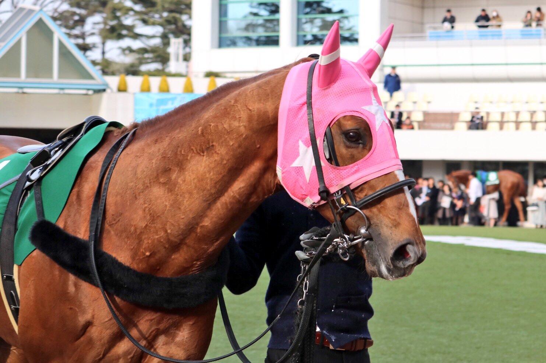 京阪杯2019の競馬予想分析!5つのデータから導く勝ち馬候補