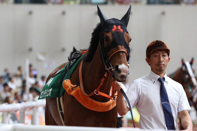新潟記念2019の最新予想オッズ!日程・出走予定馬と人気の傾向は?/JRA
