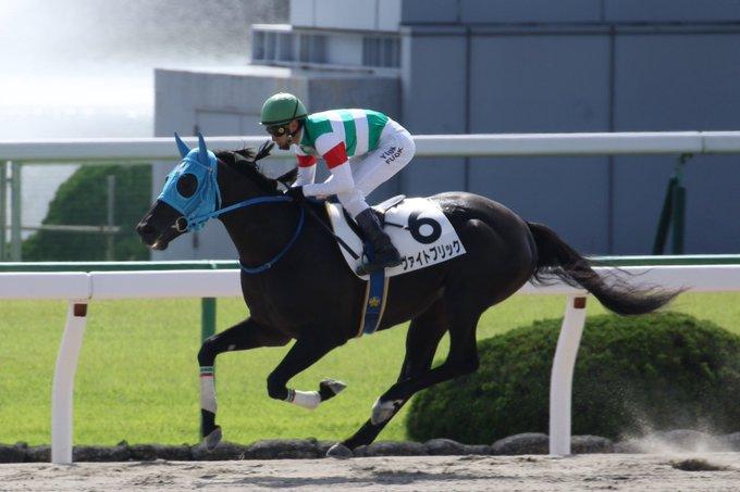 レパードS2019の最新予想オッズ!日程・出走予定馬と人気の傾向は?/JRA