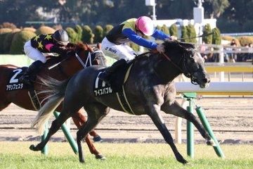 中日新聞杯2019の競馬予想分析!6つのデータから導く勝ち馬候補